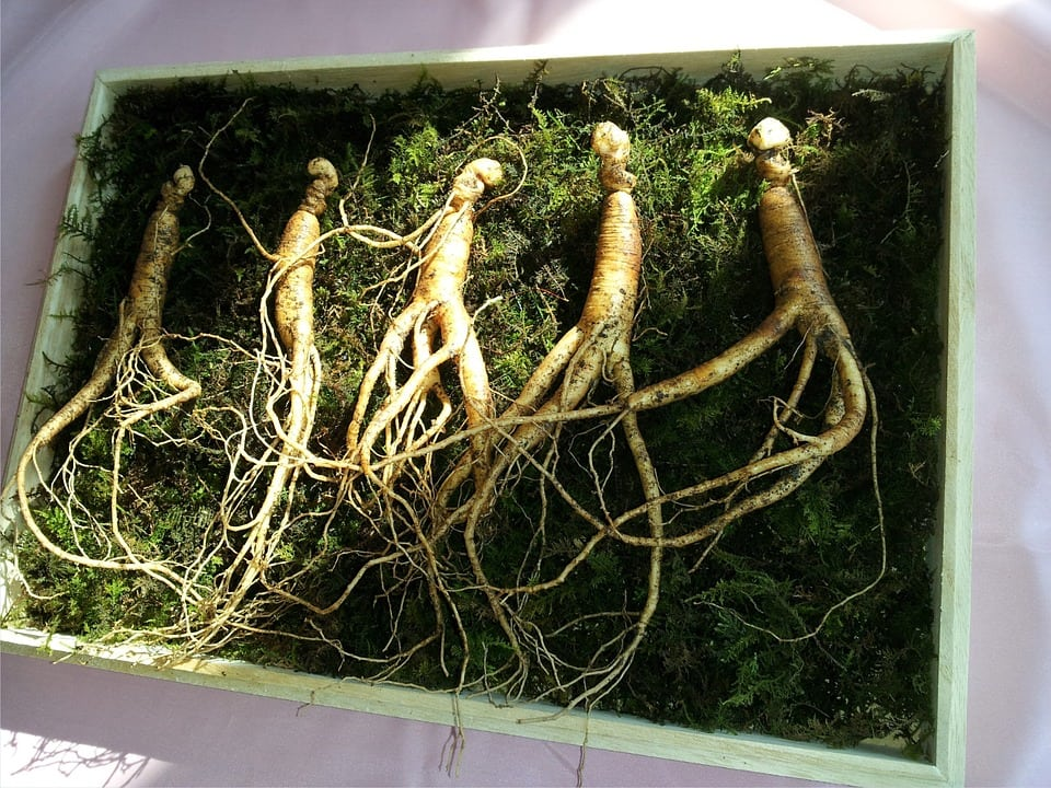 Ginseng and Your Health: Herbal Treatment and Prevention
