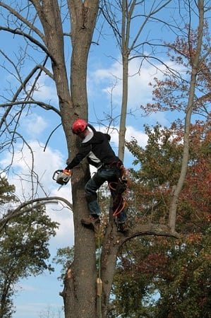 Useful Steps You Should opt for Tree Removal Process