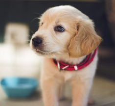 Things You Need Before Bringing Home a New Puppy