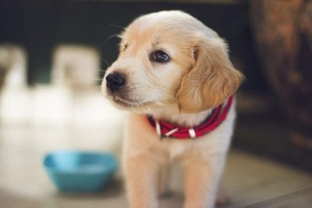 Things to Consider Before Bringing a Puppies Home
